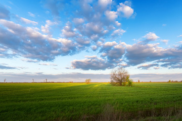 tree in the field / Bright spring picture bright colors