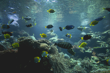 a lot of fish swimming and floating under water, several colours and species, enjoying the clear blue water