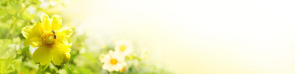 Sommerblumen im Garten  -  Panorama