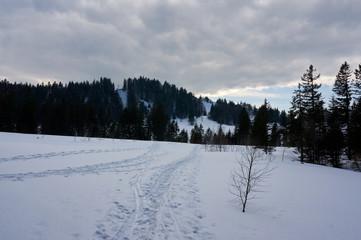 Pfade im Schnee