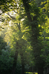 sunset / sunrise shines through the trees in the woods