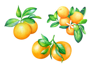 Watercolor collection of hand drawn orange fruits with green leaves