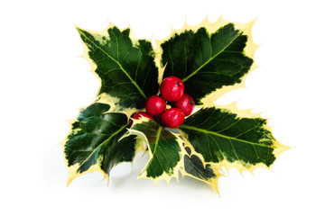 Sprig of holly.