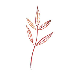 Autumn leaf. Autumn maple leaf isolated on a white background. Watercolor illustration.
