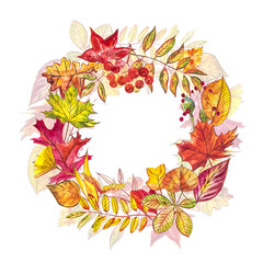 Autumn composition. Wreath made of autumn berries and leaves on white background. Watercolor illustrations.
