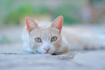 Jeune chat roux aux yeux verts