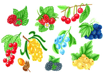 set of various berries isolated on white background hand-drawn illustration