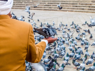 Hyderabad, India. Pigeons in front of Mecca Masjid, a famous monument in Hyderabad, India. Fototapete