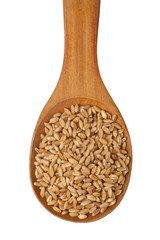 Wheat grain in a wooden spoon