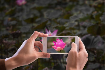 Man uses a smartphone to take a picture. Take a picture of lotus in the pool