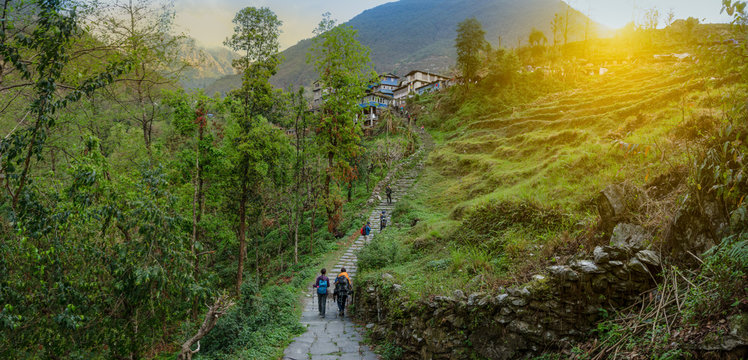 A group of  modern tourists backpackers travels in the summer along the agriculture village of rice on terrace hill way,  Nepal Himalayas. travel concept and nature