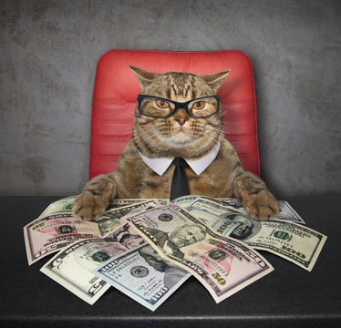 The smart cat sits at the table on which there are a lot of american dollars.