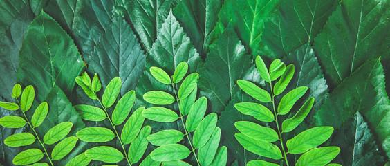 Green leaf background ,texture Banner concept