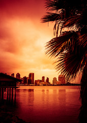 Wall Mural - Beautiful sunset over San Diego skyline with bay and palm trees