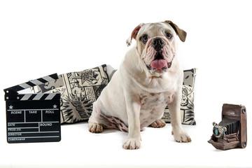white english bulldog sitting on a film scenario with white background