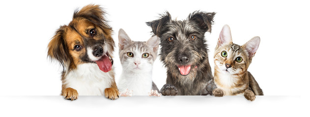 Spoed Fotobehang Hond Dogs and Cats Paws Over Website Banner
