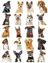 Collection of Close-up Dog Portrait Photos