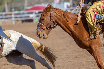 Close Up Of A Bucking Horse Being Ridden In A Country Rodeo