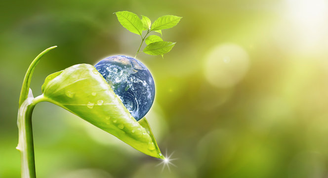 Earth Day.Planet earth with beautiful freshness growth tree and drop of water holed by new growth plant on outdoor summer forest bokeh background.Earth image furnished by NASA.