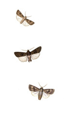 Illustration of a butterfly