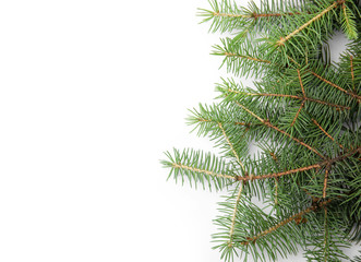 Branches of Christmas tree on white background