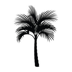 A black and white silhouette of a palm tree