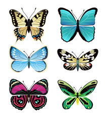 Butterflies Types Collection Vector Illustration
