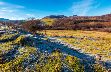 morning hoarfrost on the grassy meadow in mountains. beautiful autumnal landscape with naked forest and hill in the distance.