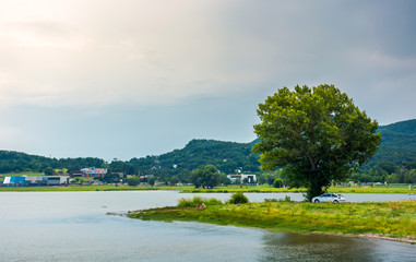 tree on the shore of Zemplinska Sirava in summer. beautiful and calm scenery of one of the largest Slovakian body of water. Kaluza resort village in the distance