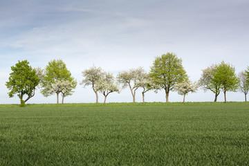 Bäume mit frischen Grün im Frühling, Deutschland Wall mural