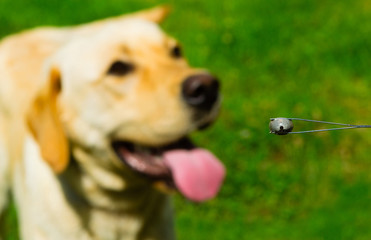 big tick in tweezer, blur dog at background