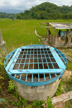 drainage water management and flow control structure by the paddy field in Tambunan Sabah Malaysia