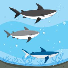 Diffrent Sharks Swimming Underwater
