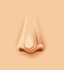 A Closeup Human Nose