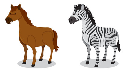 Horse and Zebra on White Background
