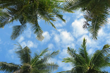 Bottom view to palm trees crowns in blue sky