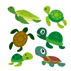 turtle vector collection design
