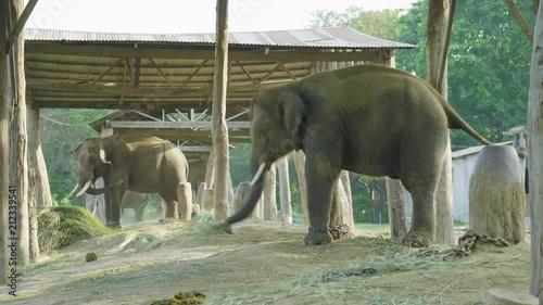 Elephants in the farm of national park Chitwan, Nepal