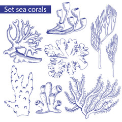 set of corals. Sketch. Underwater plants. Vector