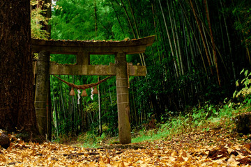 historical Torii in a forest in japan