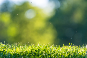 Fresh green grass in a park with an abstract green background