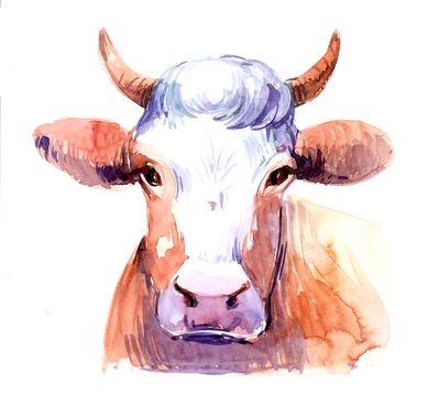 Cow. Watercolor illustration