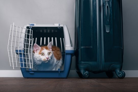 Cute tabby cat sit in a travel crate beside a suitcase and look anxiously sideways.