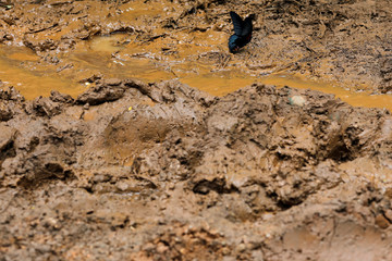 A butterfly stands on the mud outside Tham Luang cave complex, where 12 schoolboys and their soccer coach are trapped inside a flooded cave, in the northern province of Chiang Rai