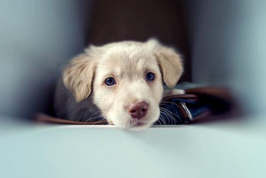 Ritratto di cucciolo di cane con occhi dolci ed espressivi,