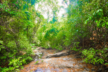 Tropical forest jungle trail in Koh Lanta Island, Krabi in Thailand
