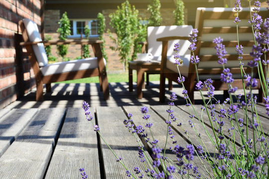 Provence style tea time in the modern backyard garden terrace surrounded by lavender