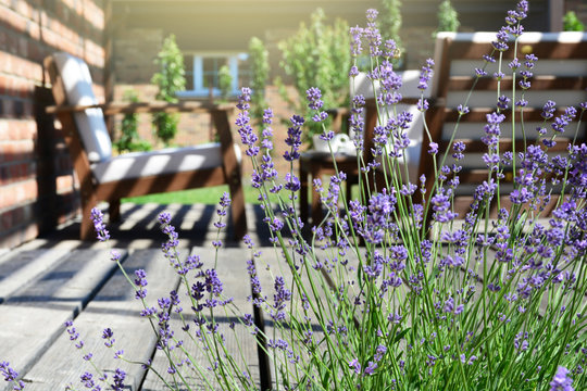 Lavender in the modern backyard garden terrace. Provence style tea time