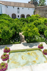 Spain, Cordoba, VIEW OF PLANTS BY SWIMMING POOL IN BUILDING
