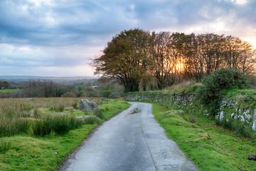 Fototapete - Moorland Lane in Cornwall